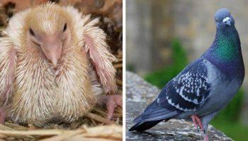 Красивые Птицы, которых вы никогда не видели маленькими раньше