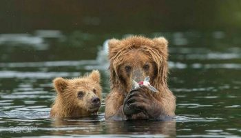 10 космически милых снимков медведиц с детьми