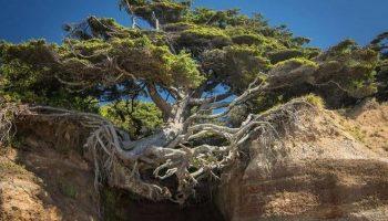 Когда есть стремление ЖИТЬ: Этим деревьям ничего не страшно