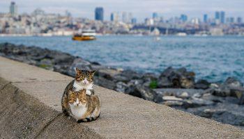 Это самые дружелюбные коты в мире: Котячая дружба существует