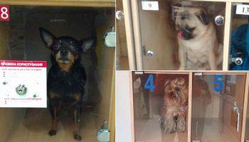Зоозащитники призывают не оставлять животных в камерах хранения в магазинах (фото)