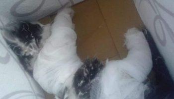 Малыши скинули котенка с 8 этажа, а потом смотрели, как он падал вниз…