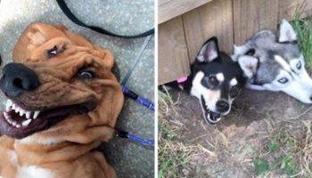 10 снимков забавных пёсиков, которые вызывают умиление и улыбку