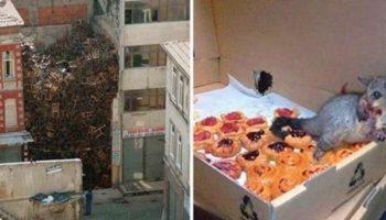 Посмотрите дважды: Самые необычные фото из Интернета