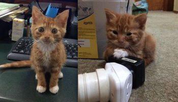 Крошечный Рыжий котенок, который никогда не вырастет во взрослого кота, безумно счастлив в своей семье