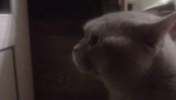 Веселый Котик так хотел зайти, что закричал человеческим голосом «Открой мне»