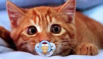 Только представьте себе: Котенок и соска