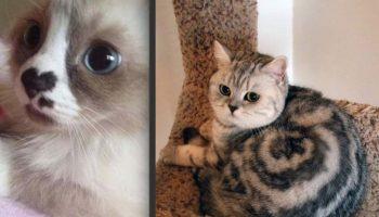 Коты и котики с забавными отметинами и пятнами на шерсти