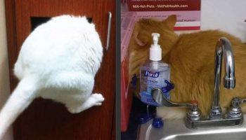 Играем в прятки: Котики, которые уверены, что они хорошо играют в прятки