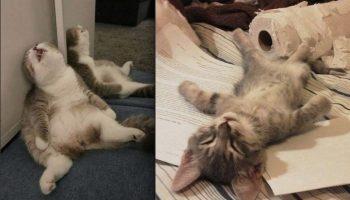 Милейшие коты, которым удобно спать в странных местах и позах