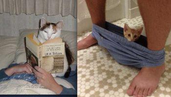 Этим котикам не понятно, что такое личное пространство человека