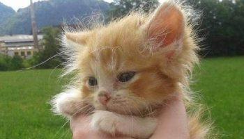 Маленького рыжего котёнка нашли в лесу без мамы-кошки. И вот два года спустя!