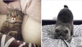 Потрясающие фото, в которых отображена вся суть характера милых, но дерзких котов