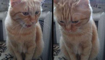 Общительный котик-рыжуля! Котик поговорил о том-о сём и спокойно лег спать
