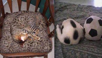 Ваша задача найти кота! Фотографии от мастеров маскировки
