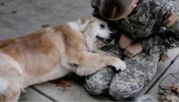 Уже старенький пес не может перестать рыдать, когда видит хозяйку после 3 трех месяцев разлуки