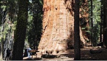 3200-летнее дерево наконец сфотографировали целиком