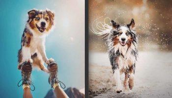 Фотограф из Чехии делает невероятные снимки собак