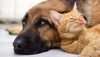 Мимишная история: Весьма нежная история про старого пса и его маленького защитника