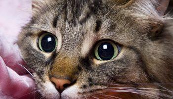 9 жизней одного кота
