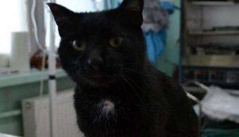 Добрая история об огромном сердце кота, которое готово согреть и утешить всех на Земле