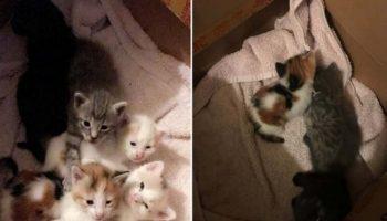 Как наша добрейшая кошка нашла котят на улице и принесла их домой