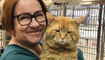 Просто невероятно большой рыжий кот очутился в приюте и… внезапно начал разговаривать с людьми!