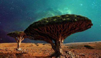 Самые невероятные и необычные леса и деревья в мира