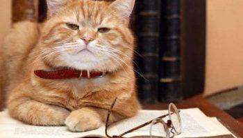Минутка любознателя: Ученые попытались выяснить, каков IQ у котов