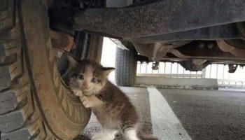 Один парень нашёл бездомного котёнка под машиной и не смог пройти мимо…
