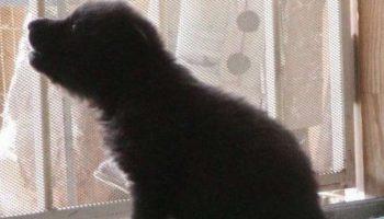 Девушка спасла 3 волчат. Сейчас они стали взрослыми гордыми животными