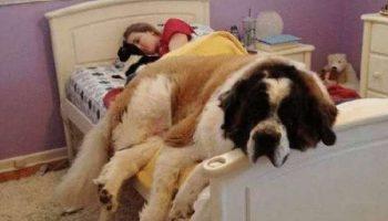 15 симпатичных собачек устроившихся в кровати хозяина