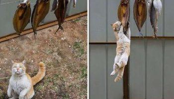 Проворные котики-воришки, которые были пойманы на горячем