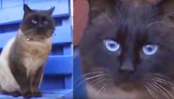 Котика увезли из дома и бросили на остановке. Но он сидит и ждет, он научился ждать