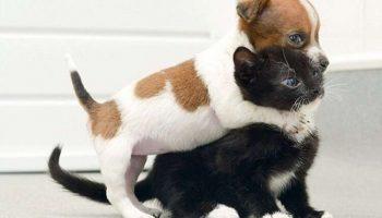 Самые очаровательные фото об искренней дружбе между котами и собаками!