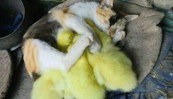 Коты многогранны и талантливы: Они могут сделать любой ваш день лучше