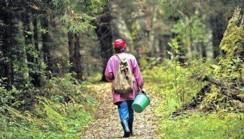 Каждые выходные мой любимый муж уезжал в лес. Я решила проследить за ним…
