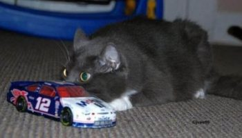 Не лучшее укрытие: Коты, выглядывающие из своего «места засады»