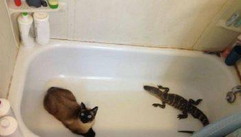 Забавные случаи, когда люди думали, что у них нет кота, а нет — но вот же он
