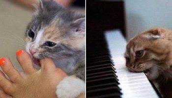 Коты и кошки, которых «хлебом» не корми, дай сделать «кусь-кусь»