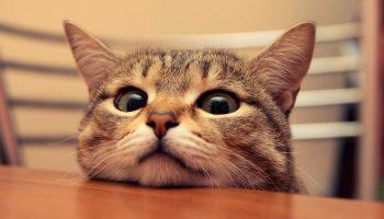 Хозяйка. Невероятная История из жизни одного кота