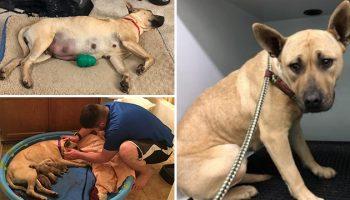Парень спас пса от Усыпления, но НЕ подозревал, что на совершил более великий подвиг
