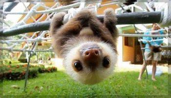 Дружелюбные детёныши диких животных, которые заставляют влюбиться в них с первого взгляда