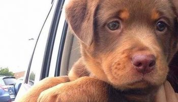 Покорили раз и навсегда: Собаки смешанных пород, которые поменяют Ваше мнение о красоте