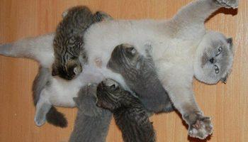 Милейшие мамочки, которые испытали на себе всю радость материнства