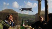 Все пренебрежение во взгляде: Коты, которые случайно попали в кадр