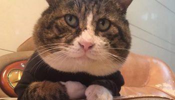 Китайский кот признан самым нефотогеничным: новая звезда Инстаграма