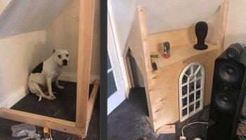 Хозяин создал своему щенку квартирку, которая похожа на мини дворец