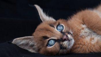 Кто же эти милейшие маленькие котята, в которых можно влюбиться с первого взгляда?