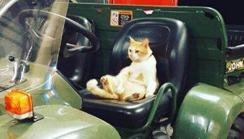 Котик с улицы пришел в пожарную часть и остался там жить. Он так решил сам!